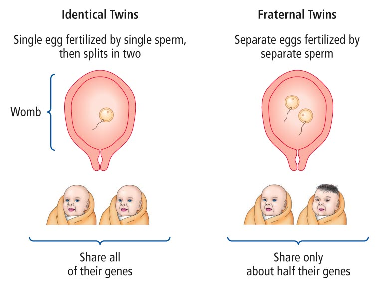 Twin Study - an overview | ScienceDirect Topics